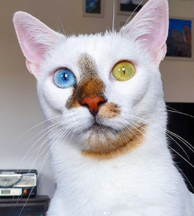 Кот с необычным окрасом