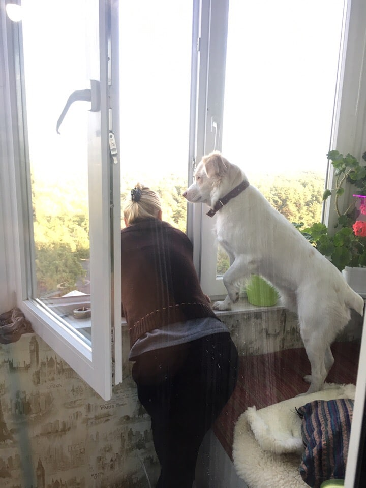 пес с хозяйкой у окна