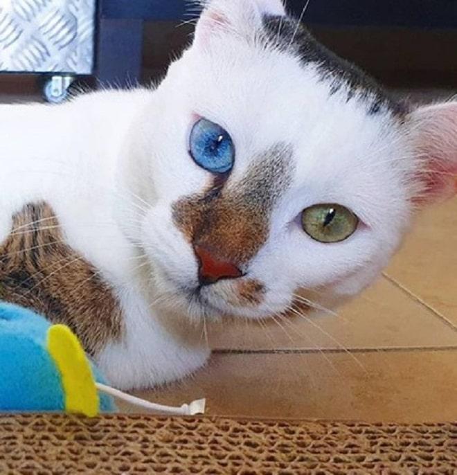 Голубой и желтый глаз