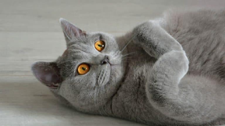 cat Jada
