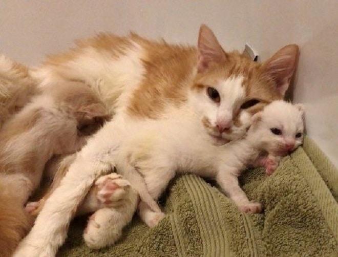 Кошка и котенок лежат