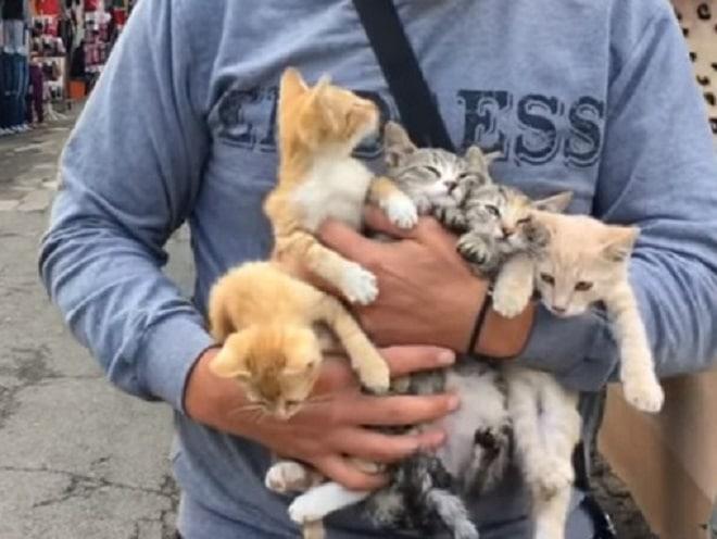 Котят на руках