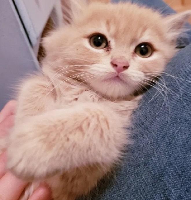 Нежный котенок