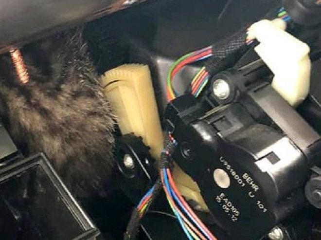 Котенок в проводах