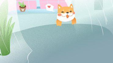 fresh indoor cat advertising background_950174