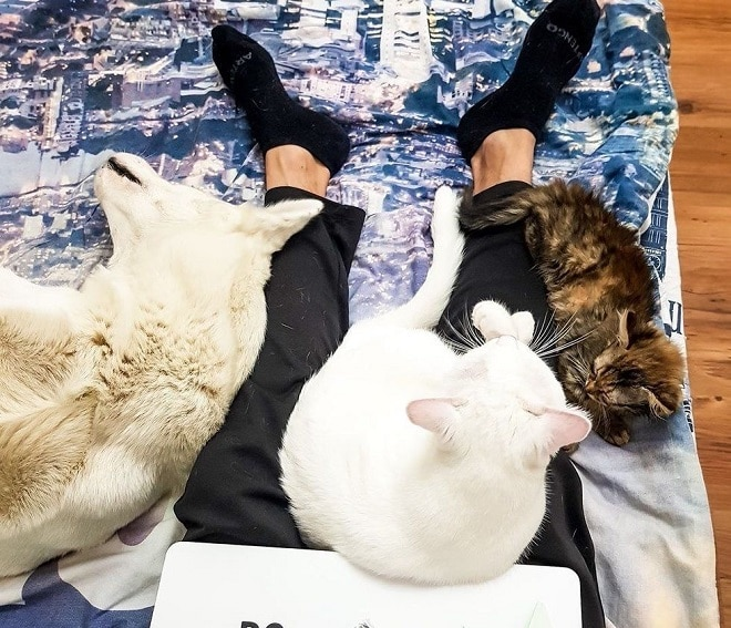 Животные и ноги