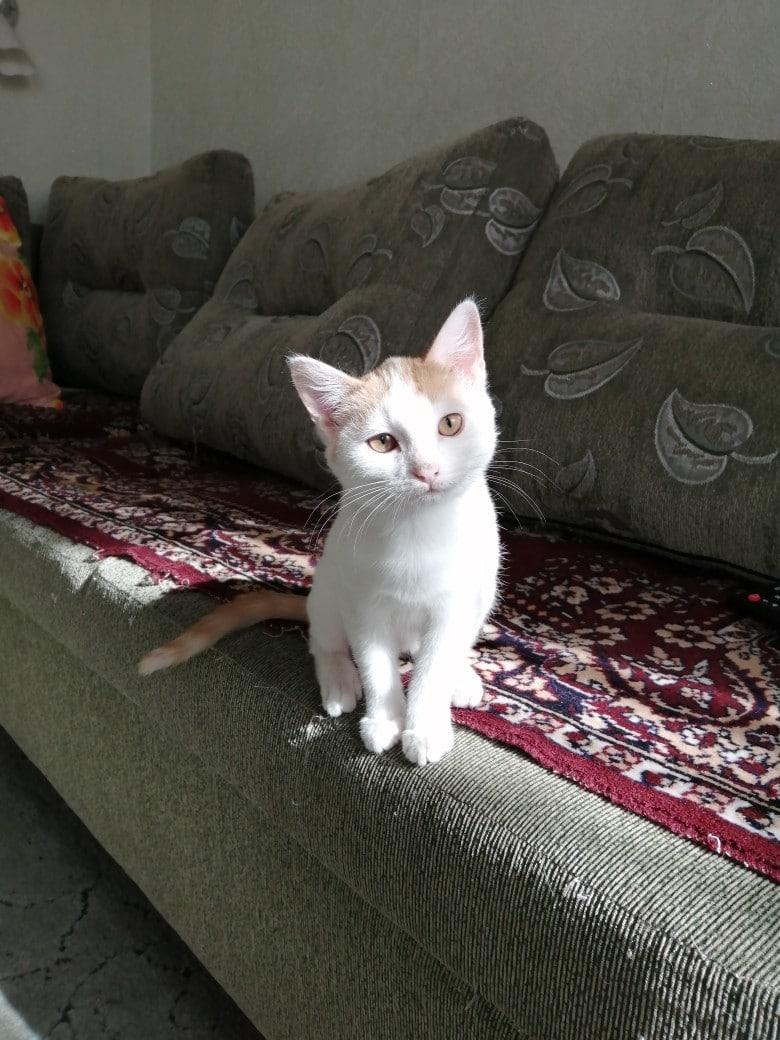 котенок на диване