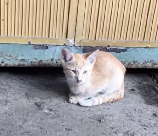 Бездомный котенок