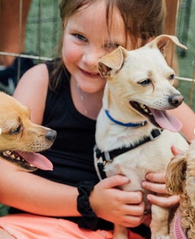 Собаки и девочка