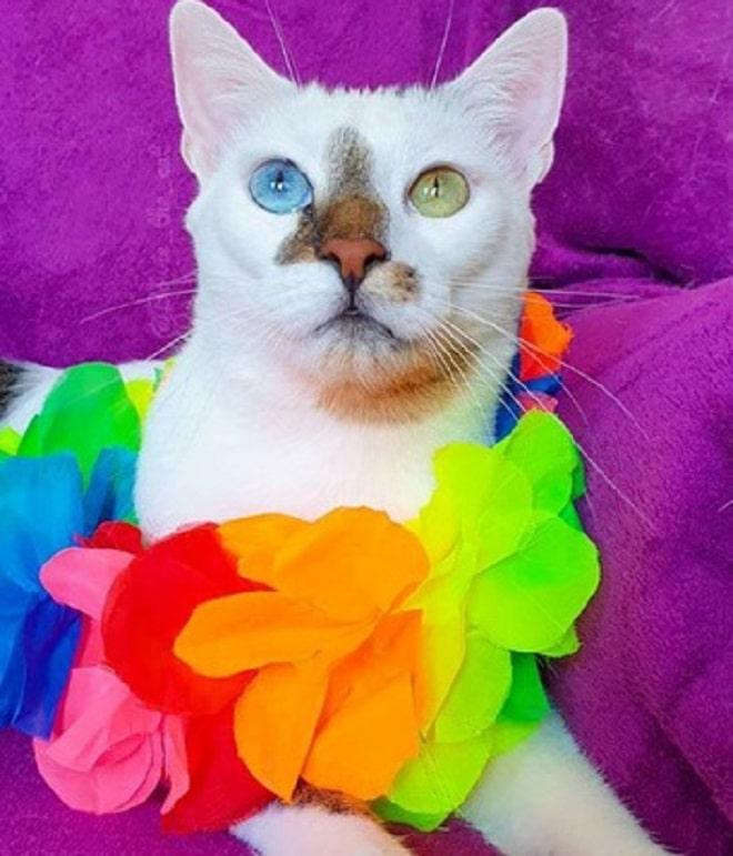 Кот с яркими цветами