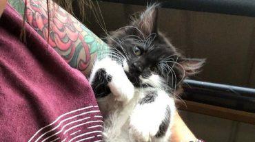 kitten and guy