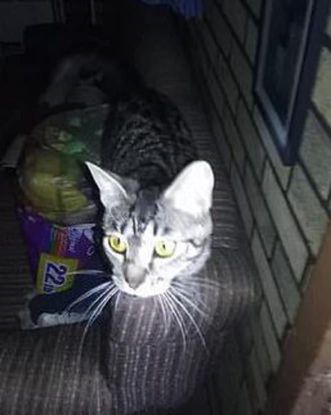 Кошка на кресле