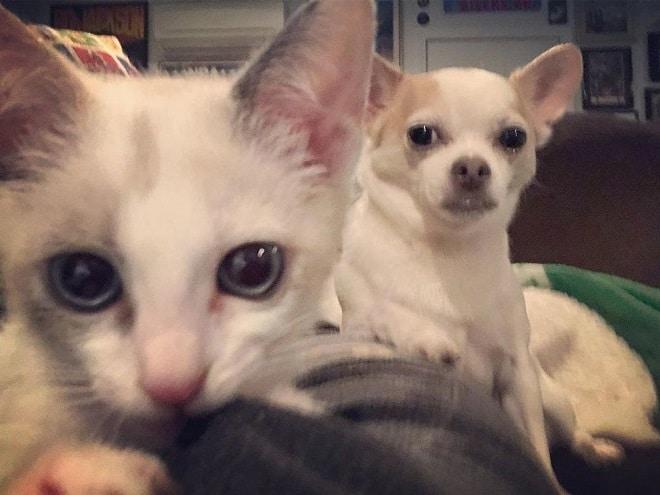 Котенок и злая собака