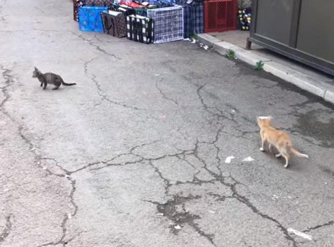 Коты идят