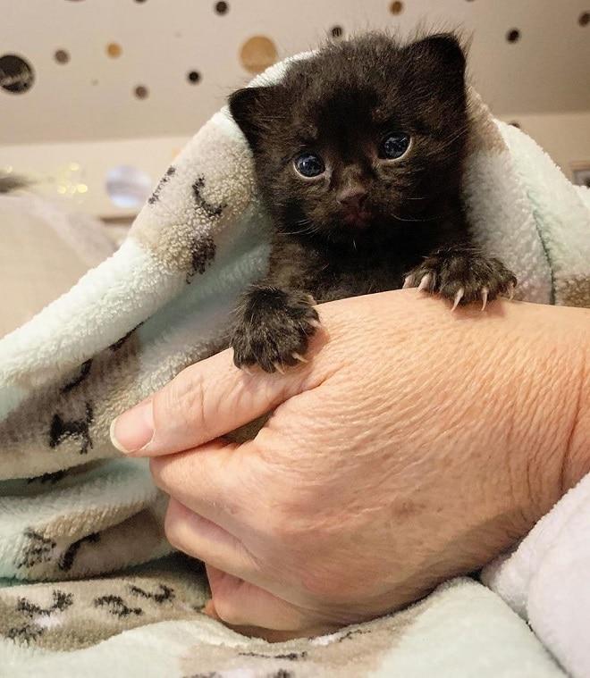 Котенок и рука
