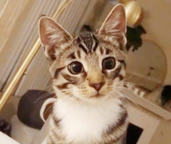 Кот с расширенными зрачками