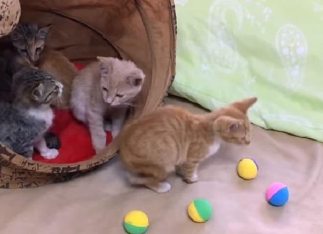 Котята и мячики