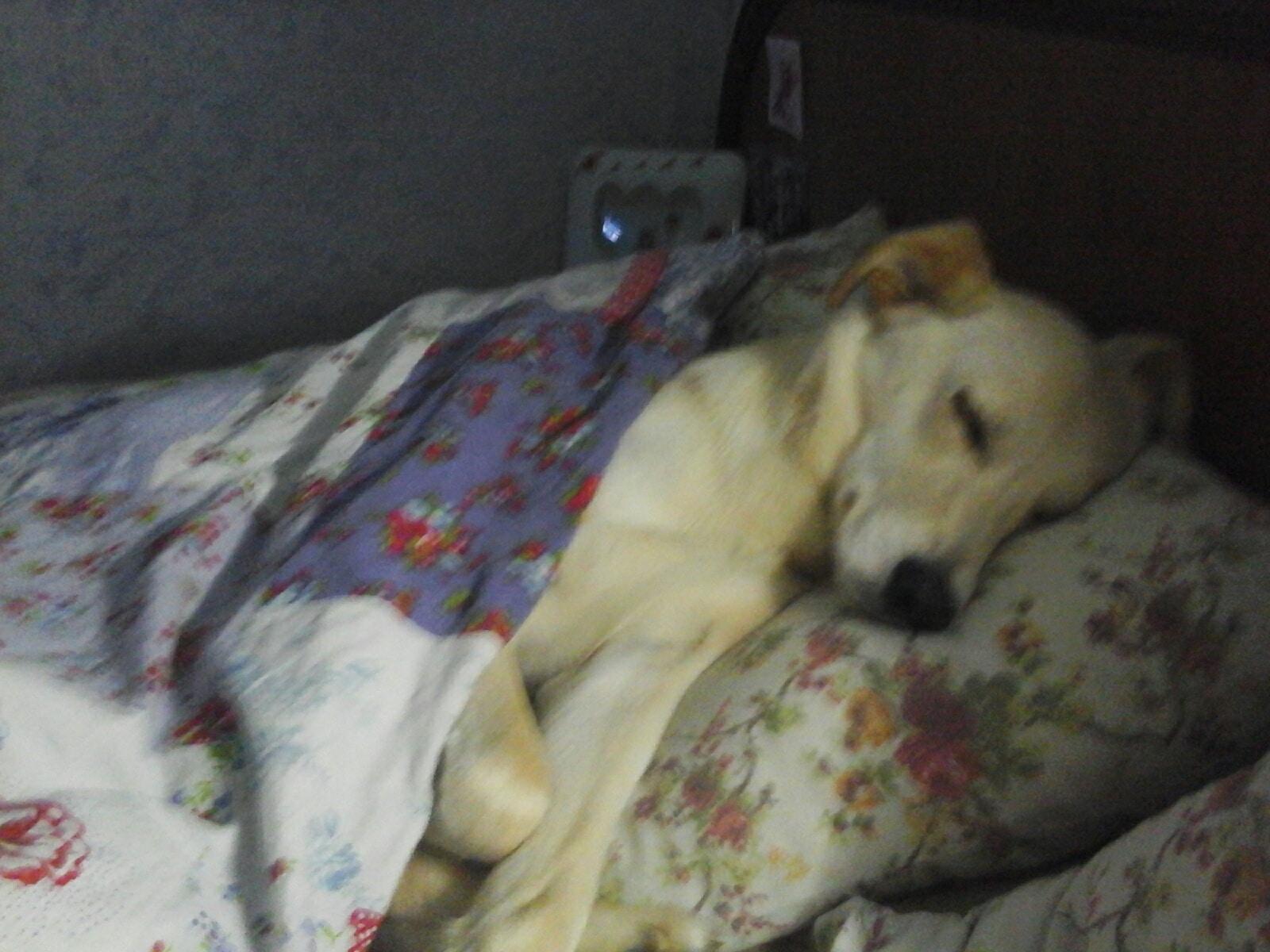 пес спит