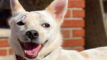 sly smiling dog