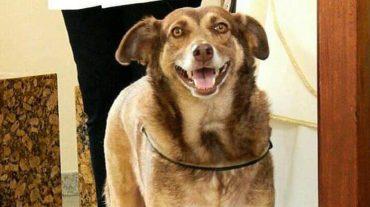 smiling stray dog
