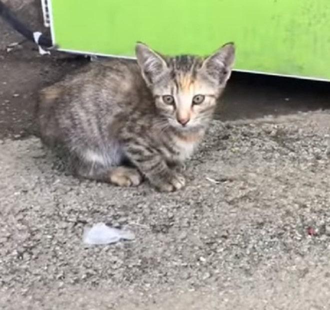 Пятнистый котенок
