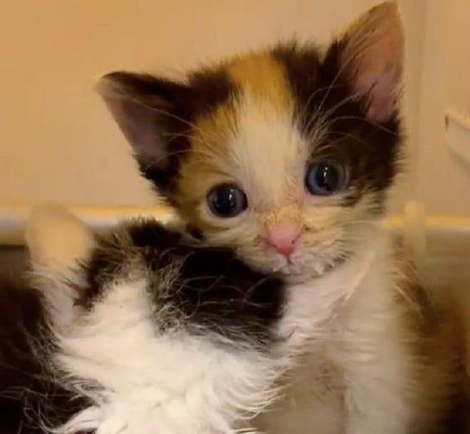 Грязные котята