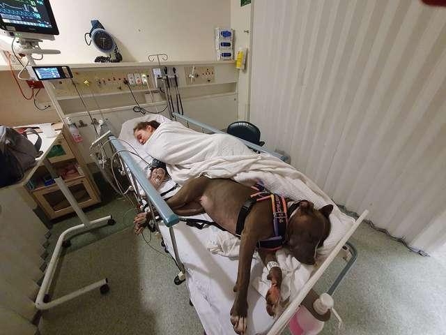 собака в больнице с хозяйкой