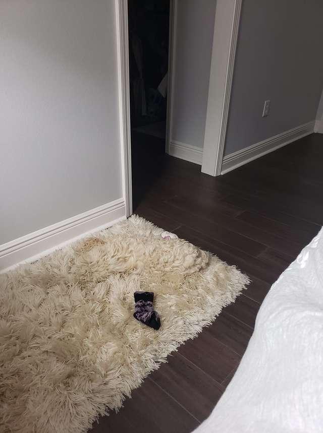пес на коврике
