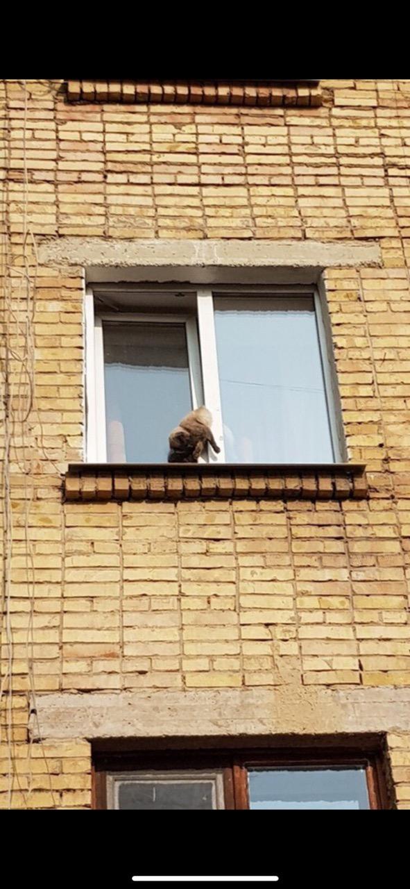 кот висит в окне