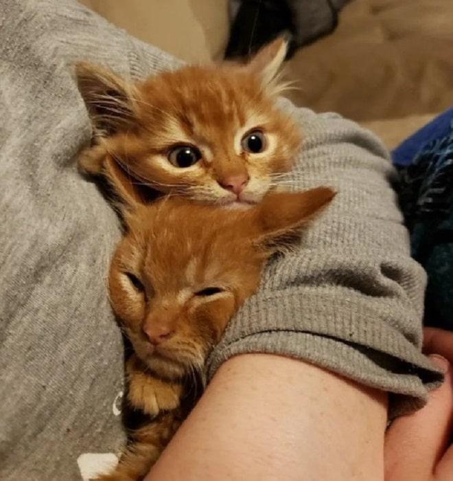 Котята и человек