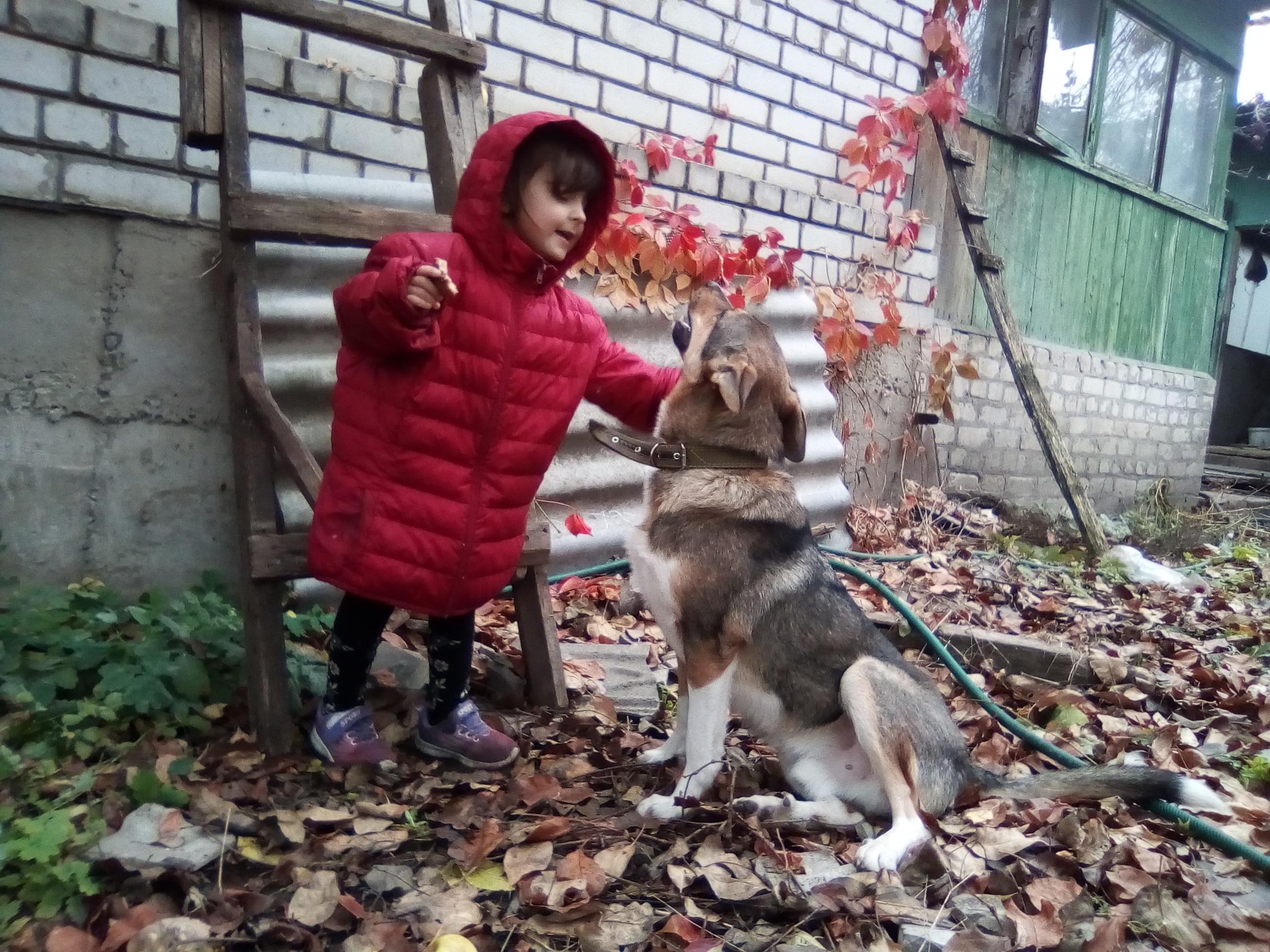 пес и девочка