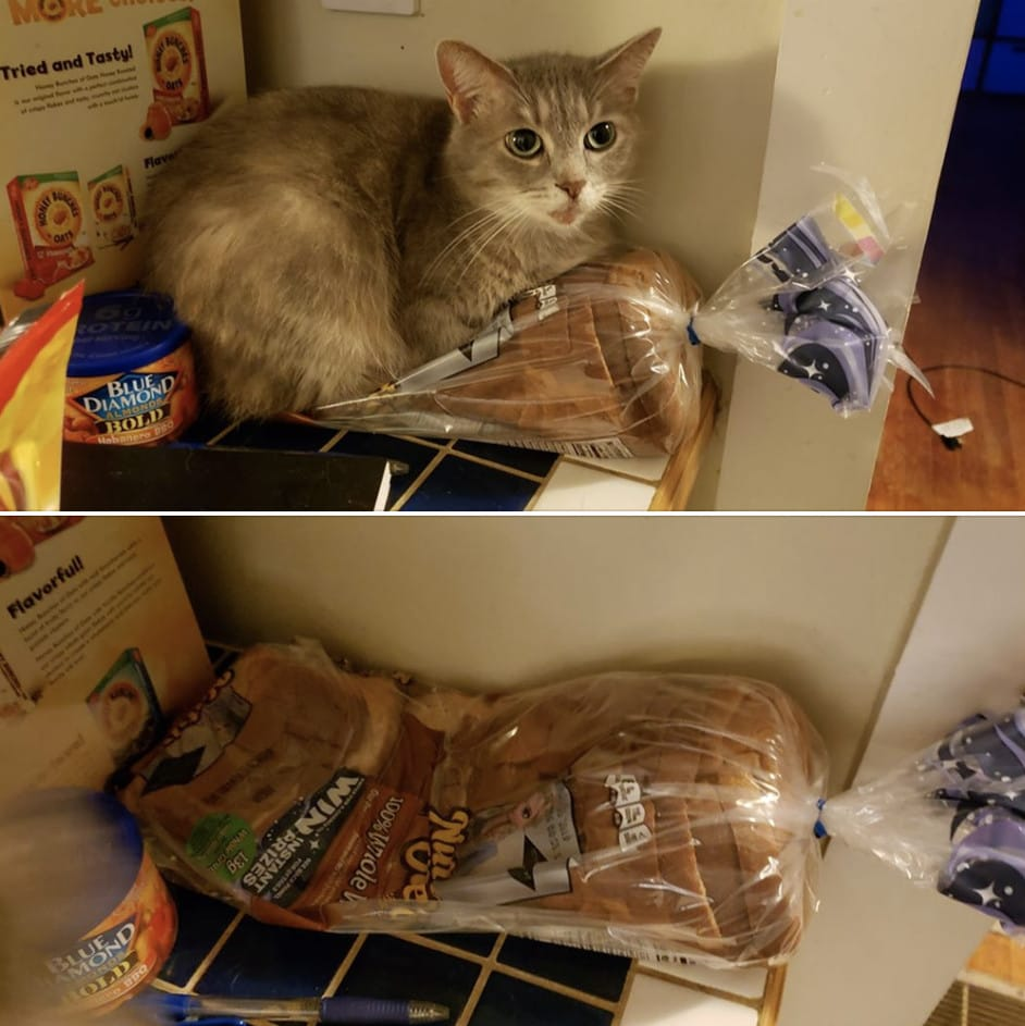 кот и хлеб
