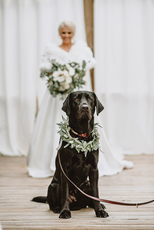 невеста и пес
