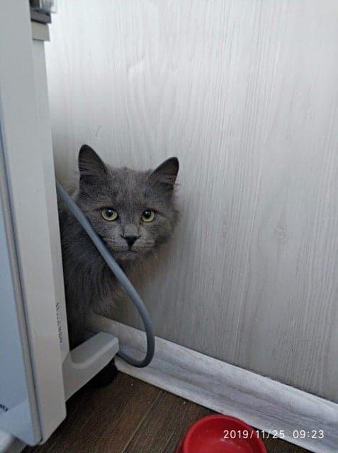 кошка в доме