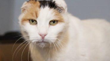 Cat Gallaudet