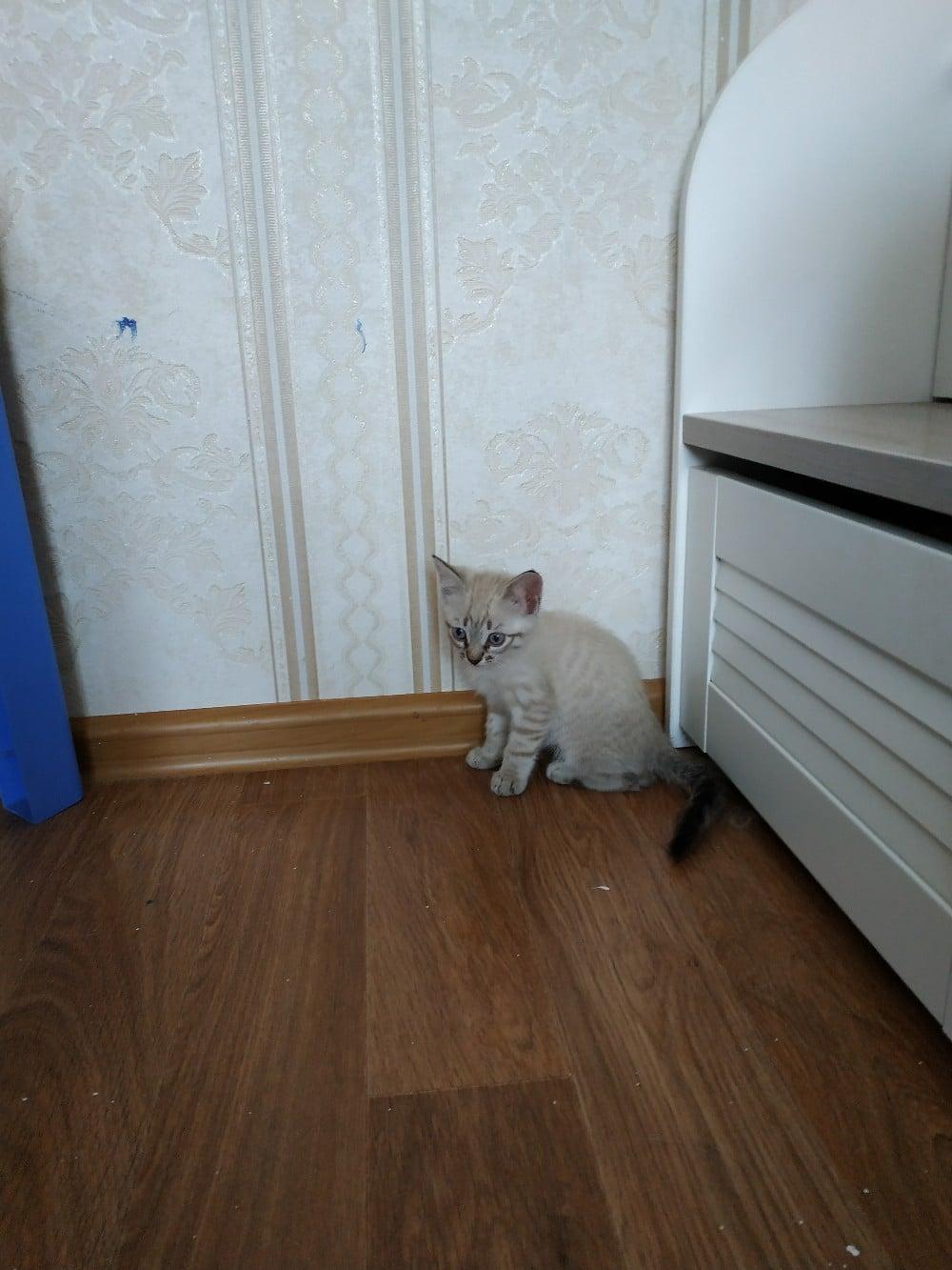котенок в углу