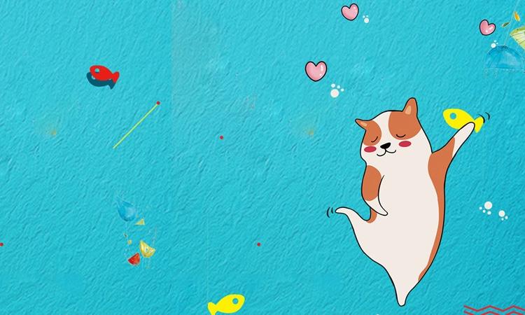 blue lovely pet cat_932728