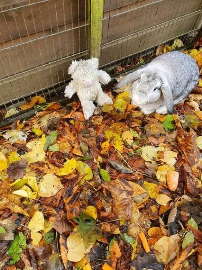 Кролик и плюшевый мишка