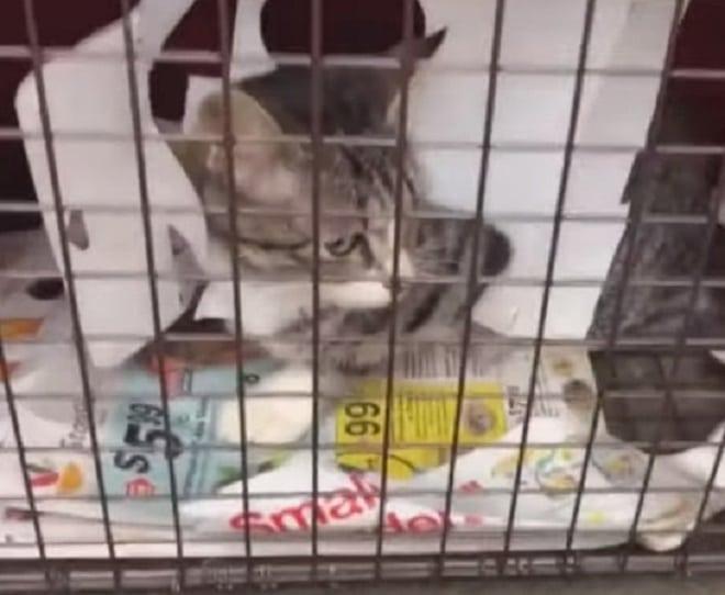 Кошка в ловушке