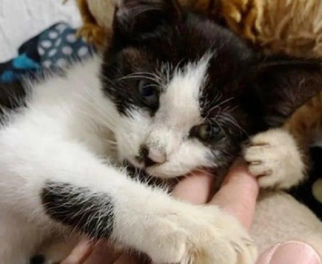 Котенок обнимается