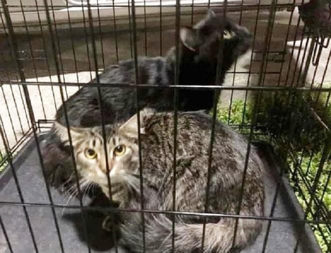 Клетка с котами