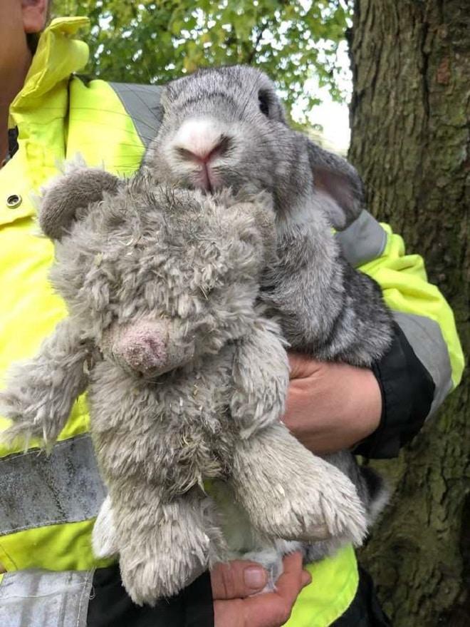 Кролика держат