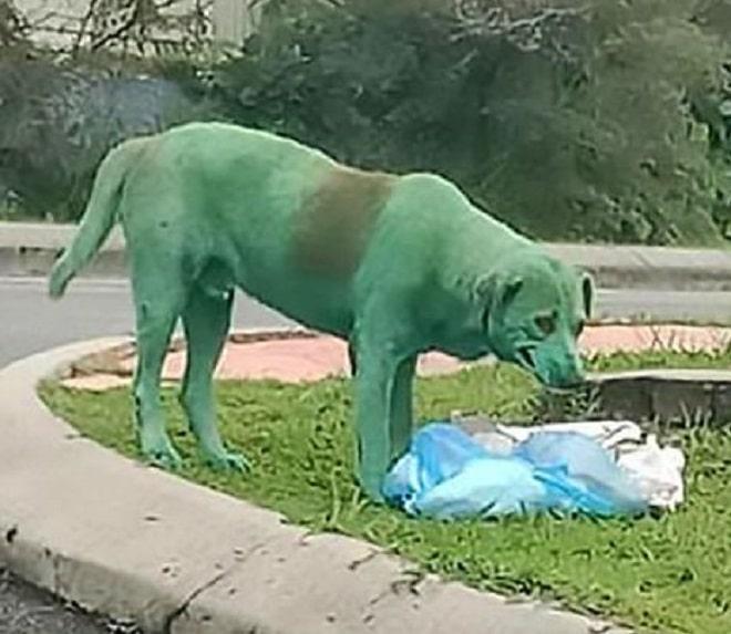 Пес возле пакета