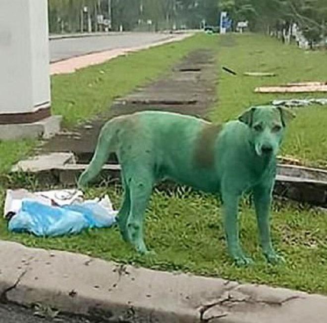 Бездомный пес