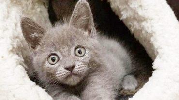 grey cutie