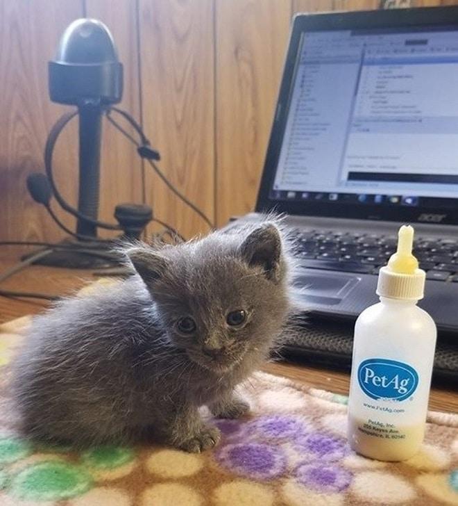 Котенок и бутылочка