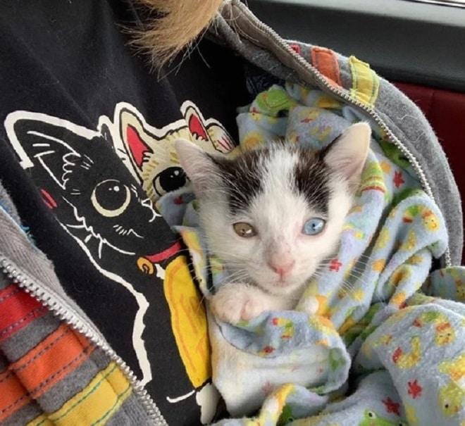 Котенок в пеленках