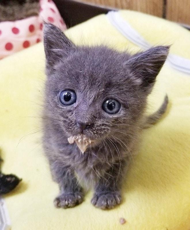 Котенок в молоке