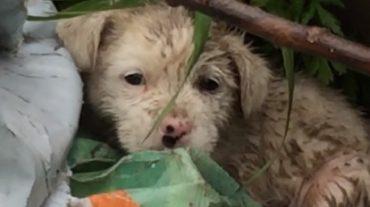 little poor puppy