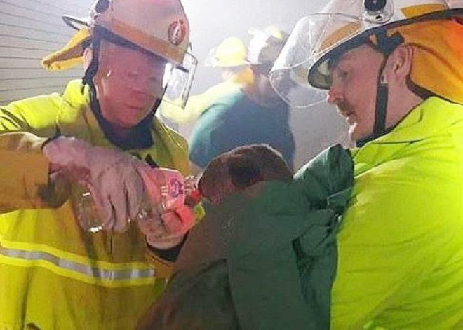 Спасатели и коала